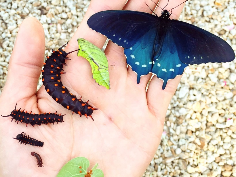 Парень в одиночку воссоздал популяцию вымирающих бабочек на заднем дворе своего дома