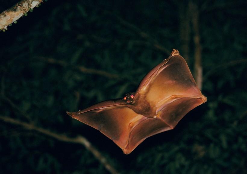 15 жутковатых существ, которые действительно обитают на нашей планете