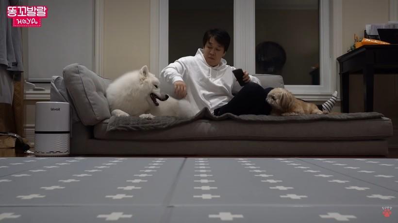 Видео: Что будет, если занять любимое место собаки